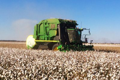 Griffith Tours New South Wales - photo of a large green cotton harvester harvesting cotton.