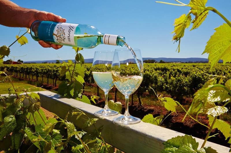 Griffith Tours New South Wales - photo of a man pouring white wine into two glasses with the vineyard a the backdrop.